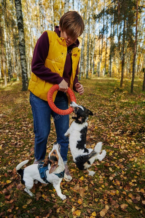 A Boy Playing With Two Jack Russell Wearing Safety Vest Mockup