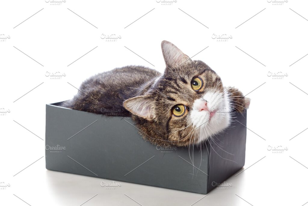 Cat On Shoe Box PSD Design Template in customizable format