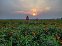 Flower Garden with Sunset Backdrop Photography