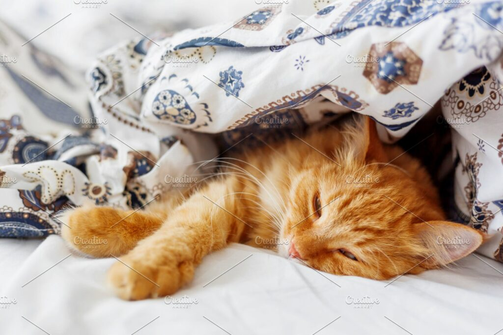Ginger Cat Sleeping Under A Blanket Mockup.