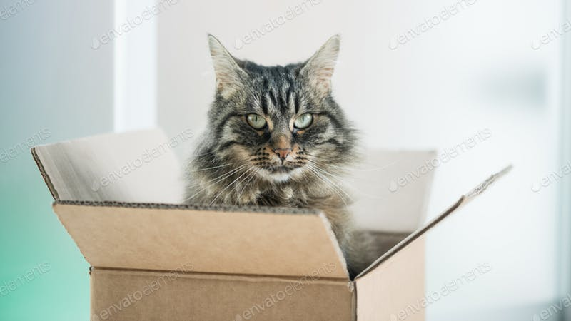 Cat On Cardboard Box Mockup
