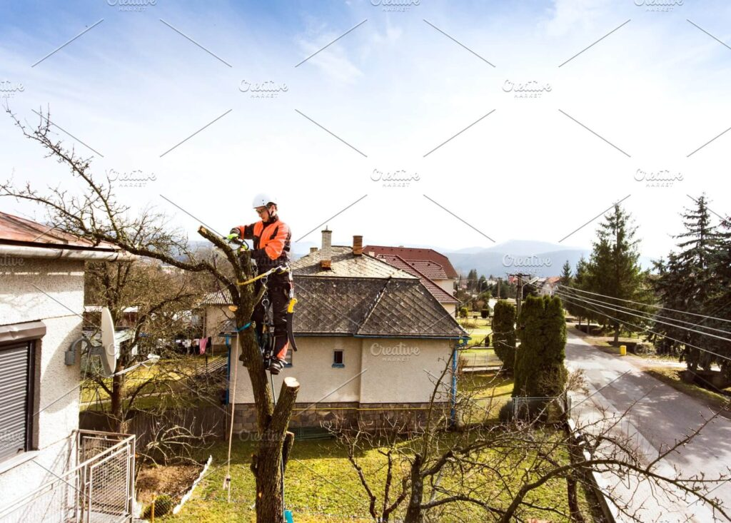 Lumberjack Wearing White Helmet And Pruning A Tree